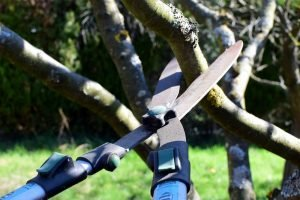 Gardening shears cutting a branch